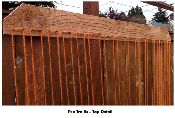 Pea Trellis Top Detail